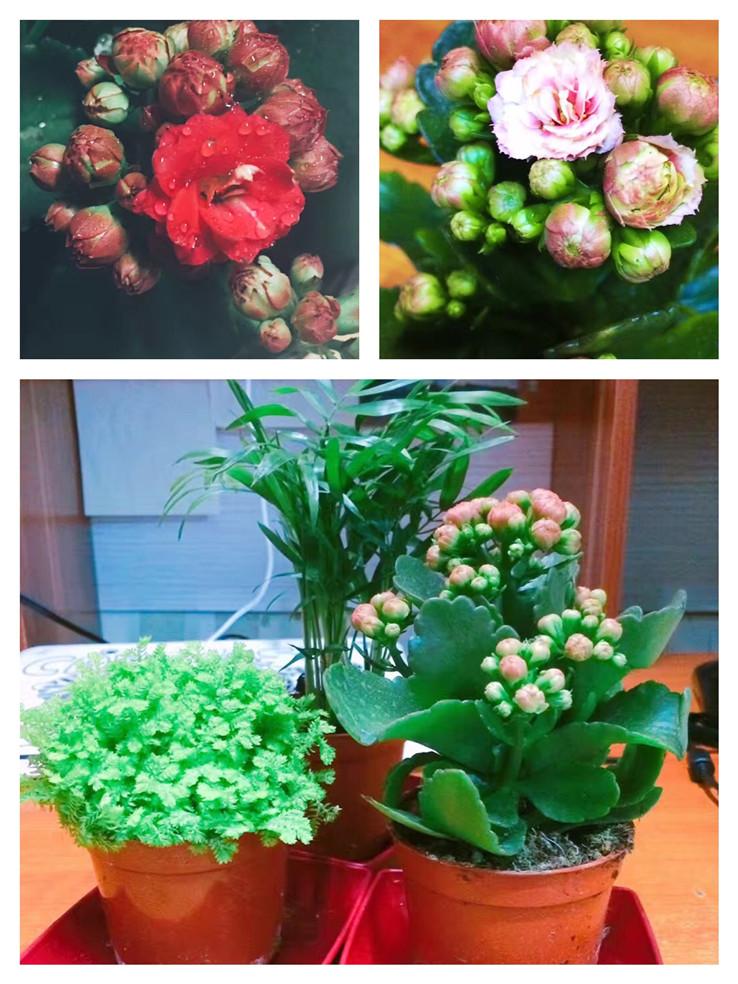 送你一朵小花花队1.jpg