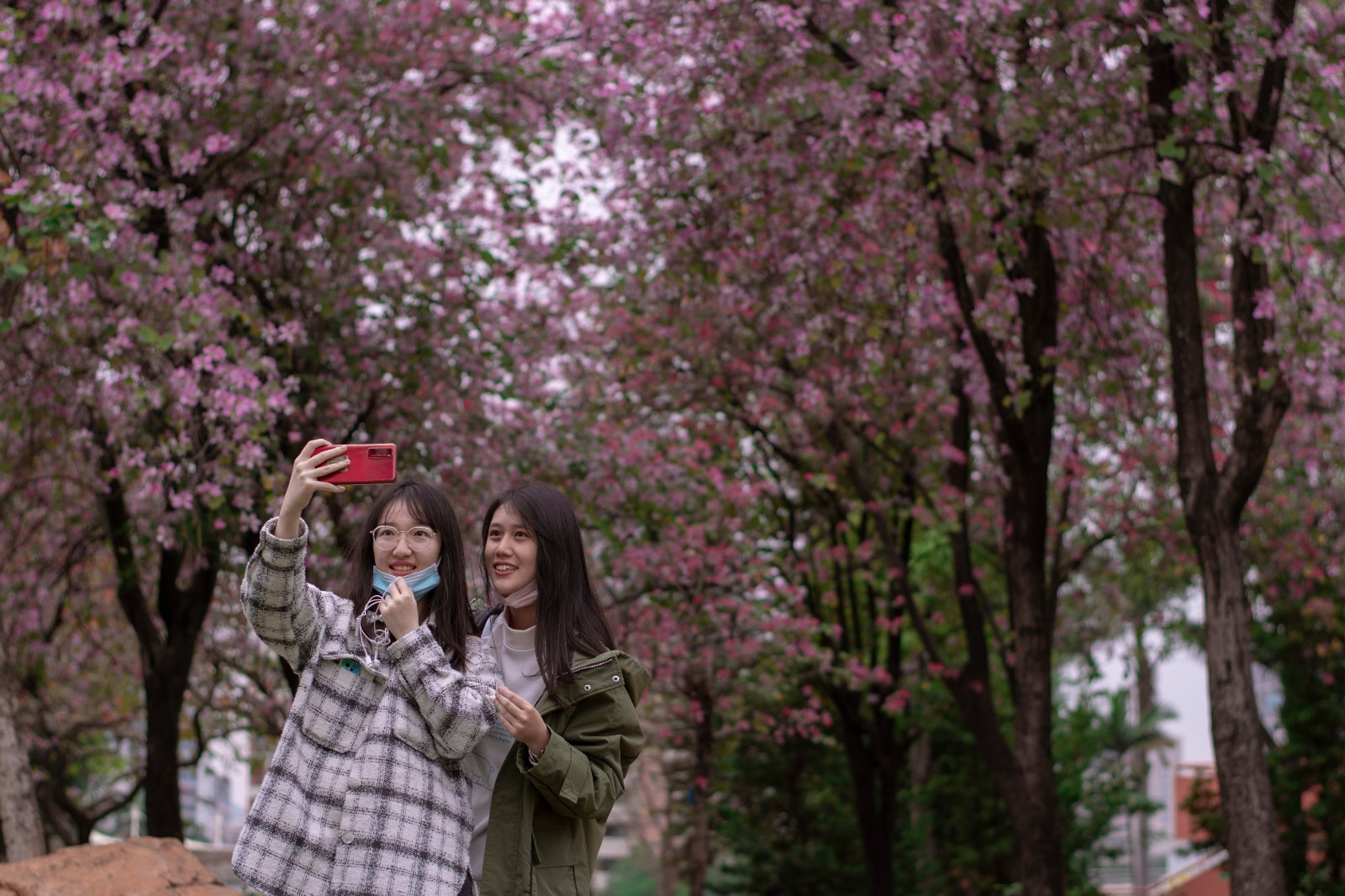 Students are taking selfie under the pink Bauhinia flowers.jpg