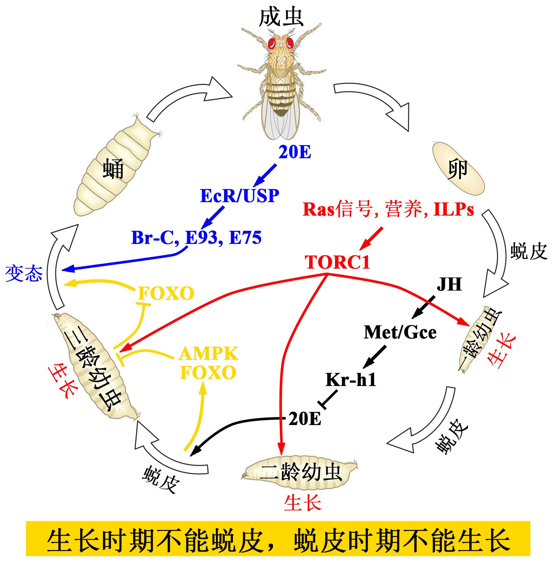 流程圖.jpg